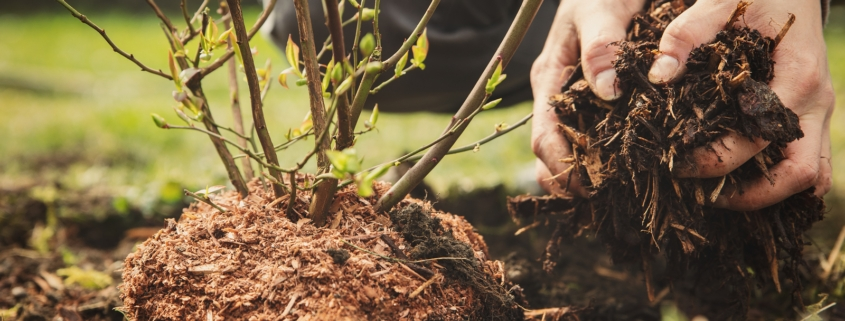 mulch, hands, bush, gardening, soil