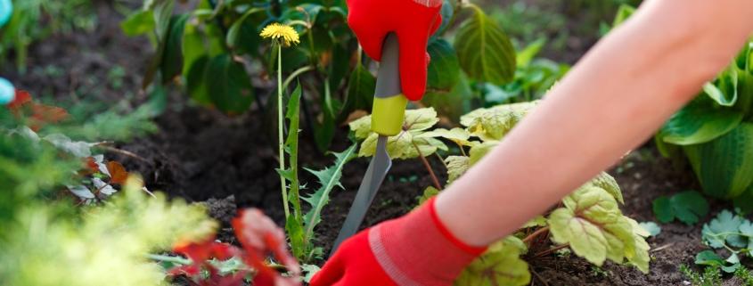 garden, gloves, weeds, arms, soil