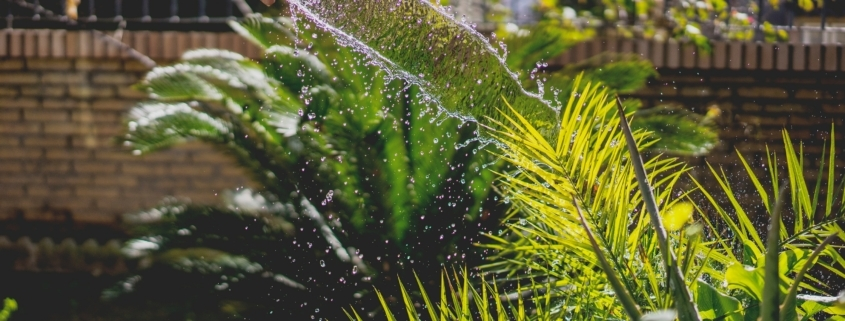 hose, garden, water, plants